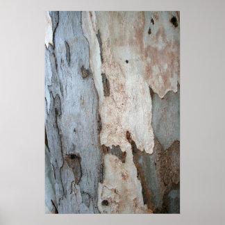 Corteza de un árbol de eucalipto póster