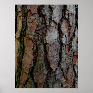 Corteza de un pino de Georgia Posters