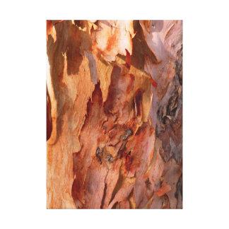 Corteza del eucalipto lona estirada galerías