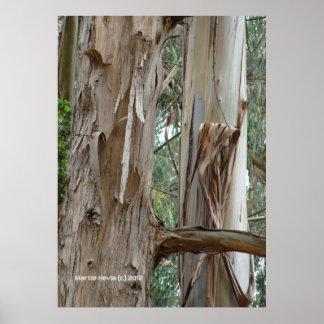 Corteza del eucalipto póster