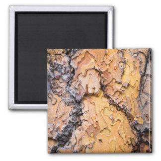 Corteza del pino ponderosa, Washington Imán Cuadrado