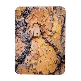 Corteza del pino ponderosa, Washington Imanes De Vinilo