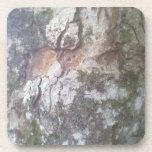 Corteza en un árbol