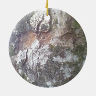 Corteza en un árbol ornamentos de reyes
