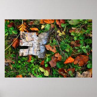 Corteza y hojas poster