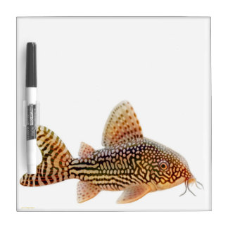 Corydoras Sterbai Catfish Dry Erase Board