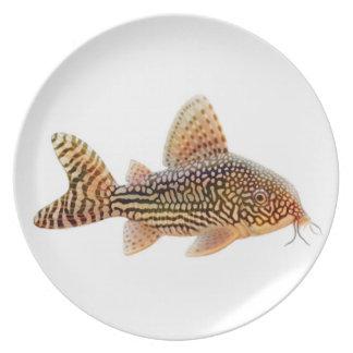 Corydoras Sterbai Catfish Plate