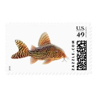 Corydoras Sterbai Catfish Postage
