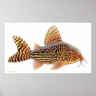 Corydoras Sterbai Catfish Print