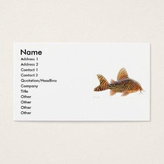 Corydoras Sterbai Catfish Profile Card