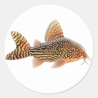 Corydoras Sterbai Catfish Sticker