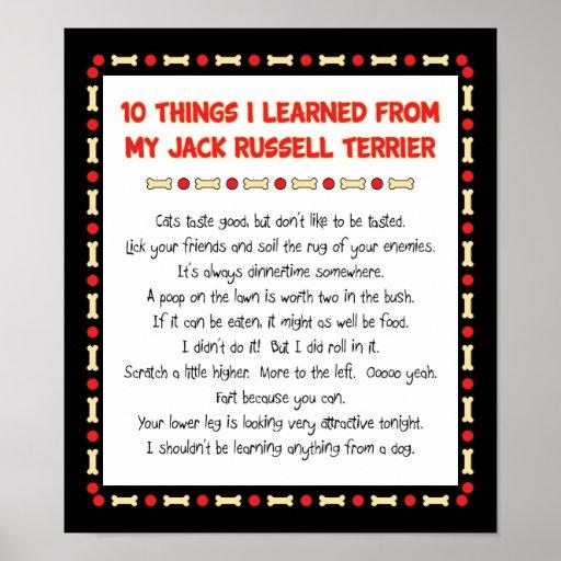 Cosas divertidas I aprendido de Jack Russell Terri Posters
