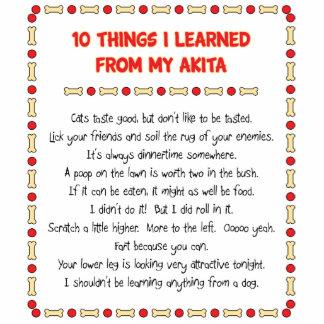Cosas divertidas I aprendido de mi Akita Esculturas Fotograficas
