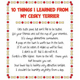 Cosas divertidas I aprendido de mi Cesky Terrier Escultura Fotográfica