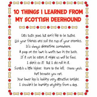 Cosas divertidas I aprendido de mi Deerhound escoc Esculturas Fotograficas