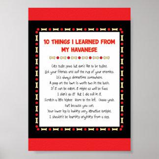 Cosas divertidas I aprendido de mi Havanese Póster