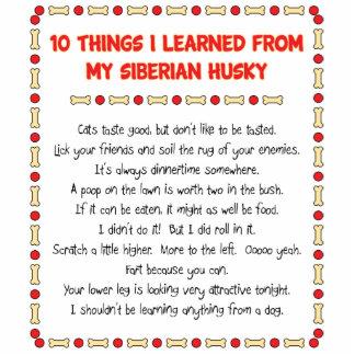 Cosas divertidas I aprendido de mi husky siberiano Esculturas Fotográficas