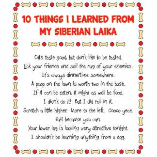 Cosas divertidas I aprendido de mi Laika siberiano Esculturas Fotograficas