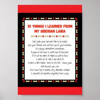 Cosas divertidas I aprendido de mi Laika siberiano Poster