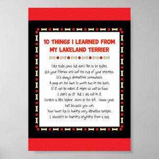 Cosas divertidas I aprendido de mi Lakeland Terrie Póster