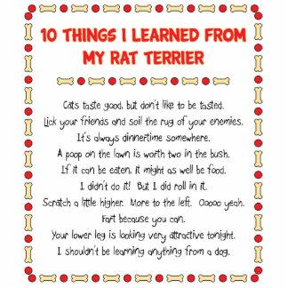 Cosas divertidas I aprendido de mi rata Terrier Esculturas Fotográficas