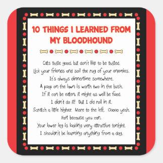 Cosas divertidas I aprendido de mi sabueso Calcomanía Cuadradas Personalizadas