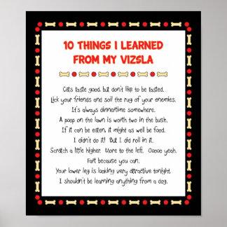 Cosas divertidas I aprendido de mi Vizsla Póster