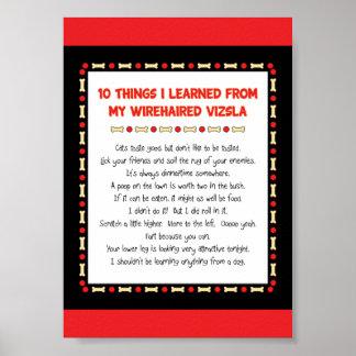 Cosas divertidas I aprendido de mi Vizsla Wirehair Póster