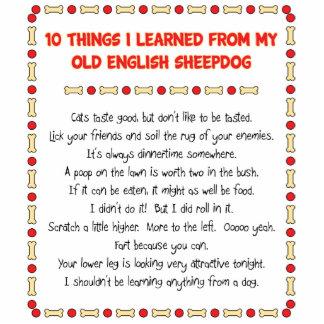 Cosas divertidas I aprendido de perro pastor inglé Escultura Fotográfica
