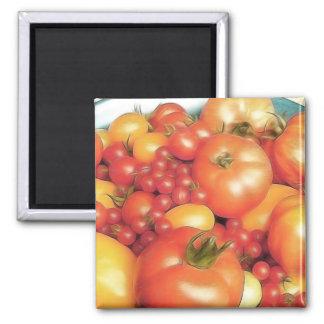 Cosecha abundante - tomates de la herencia imán cuadrado