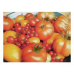 Cosecha abundante - tomates de la herencia poster