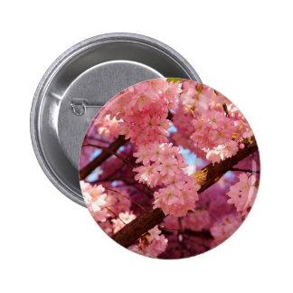 Cosecha de cereza