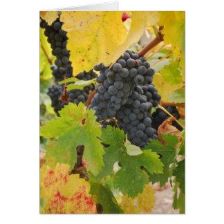 Cosecha de la caída en el país vinícola tarjeta de felicitación
