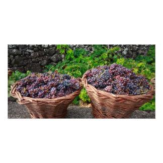 Cosecha de la uva plantilla para tarjeta de foto