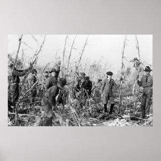 Cosecha de maíz del boy scout, 1917 impresiones