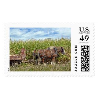 Cosecha del caballo del trabajo de Amish Timbre Postal
