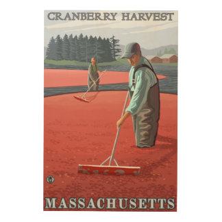Cosecha del pantano de MassachusettsCranberry Impresión En Madera