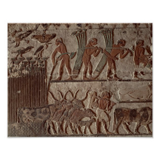 Cosecha del papiro y de un grupo de vacas impresiones