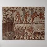 Cosecha del papiro y de un grupo de vacas póster