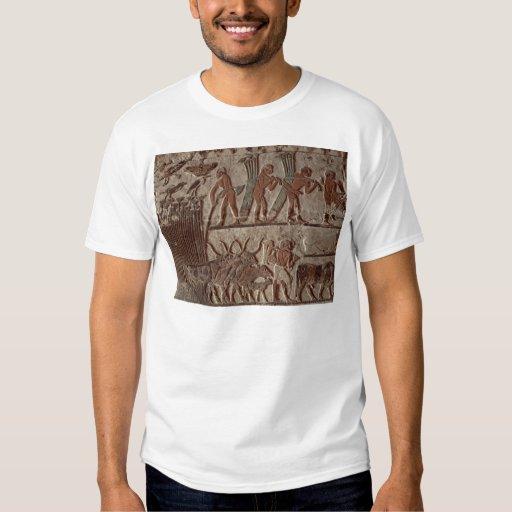 Cosecha del papiro y de un grupo de vacas remeras