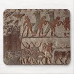 Cosecha del papiro y de un grupo de vacas tapetes de ratón