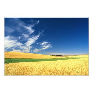 Cosecha del trigo en el Palouse en del este Cojinete