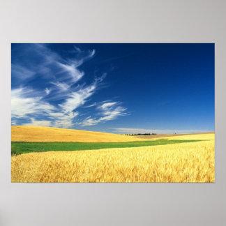 Cosecha del trigo en el Palouse en del este Impresiones