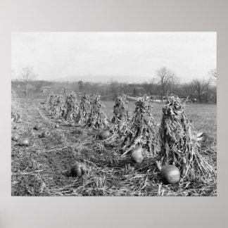 Cosecha Season, 1906. Foto del vintage Póster