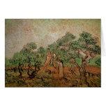 Cosecha verde oliva de Vincent van Gogh Felicitaciones