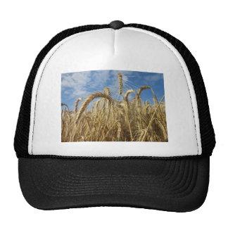 Cosechas de cereales y del cielo del verano gorras de camionero