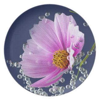 Cosmea azul plato de comida