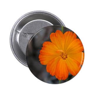 cosmo button