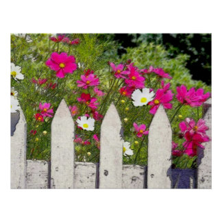 Cosmos and Picket Fence Poster