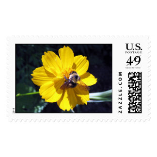 Cosmos Attracts Bumblebee Postage Stamp